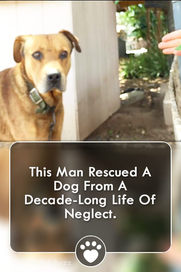 This Man Rescued A Dog From A Decade-Long Life Of Neglect.