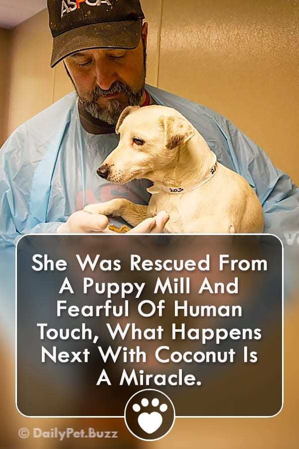 She Was Rescued From A Puppy Mill And Fearful Of Human Touch, What Happens Next With Coconut Is A Miracle.