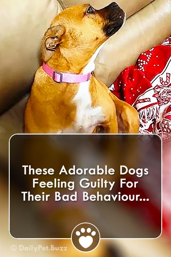 These Adorable Dogs Feeling Guilty For Their Bad Behaviour...