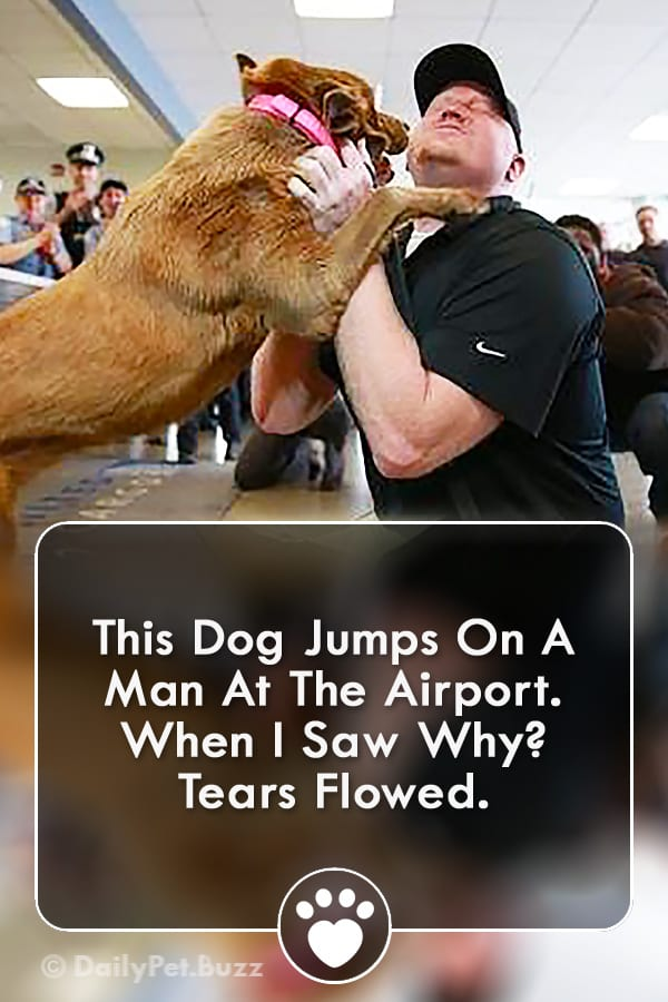 This Dog Jumps On A Man At The Airport. When I Saw Why? Tears Flowed.