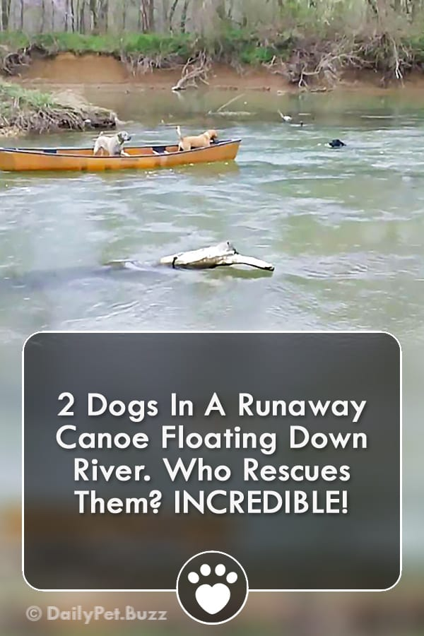 2 Dogs In A Runaway Canoe Floating Down River. Who Rescues Them? INCREDIBLE!