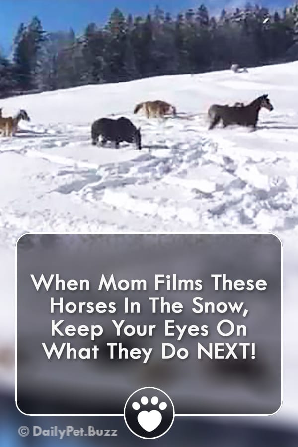When Mom Films These Horses In The Snow, Keep Your Eyes On What They Do NEXT!