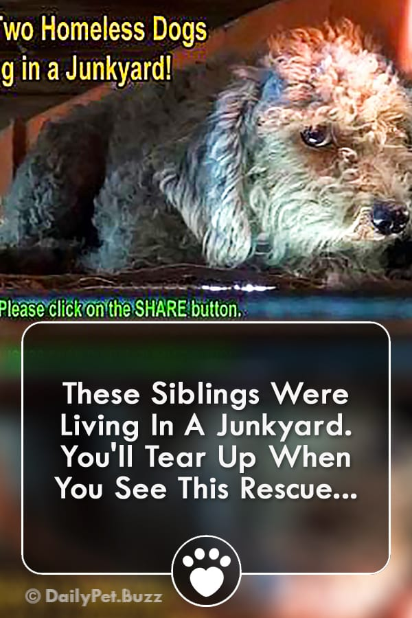 These Siblings Were Living In A Junkyard. You\'ll Tear Up When You See This Rescue...