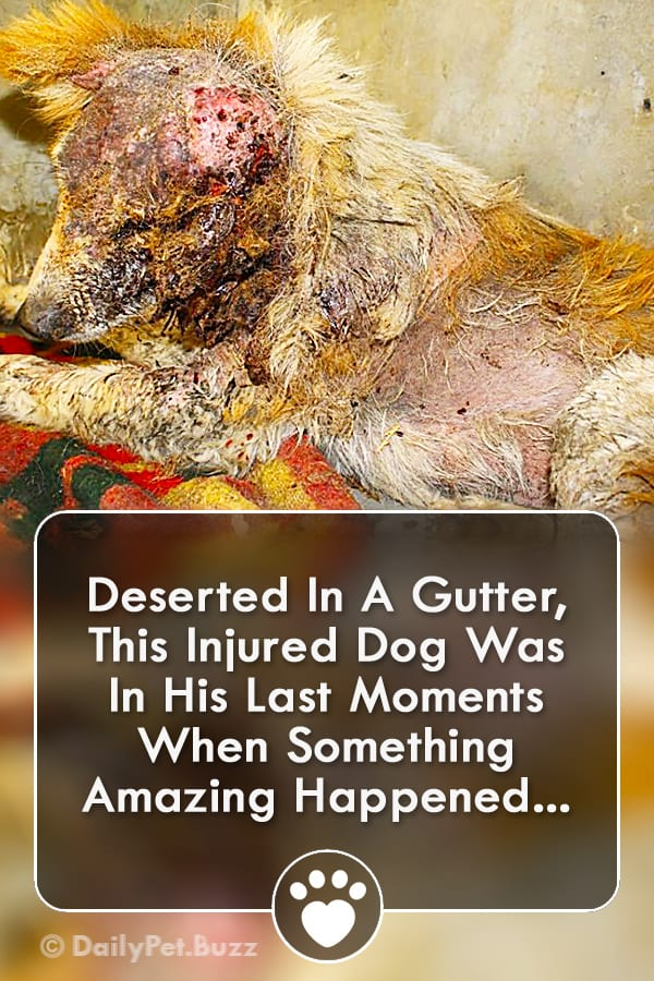Deserted In A Gutter, This Injured Dog Was In His Last Moments When Something Amazing Happened...