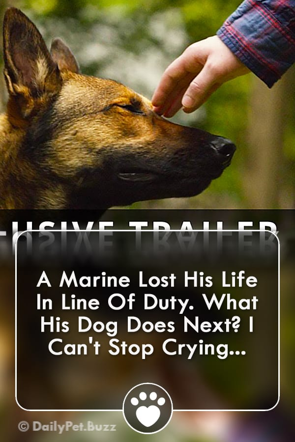 A Marine Lost His Life In Line Of Duty. What His Dog Does Next? I Can\'t Stop Crying...