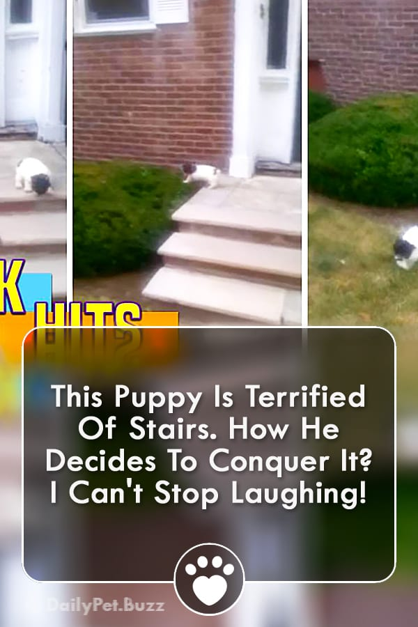 This Puppy Is Terrified Of Stairs. How He Decides To Conquer It? I Can\'t Stop Laughing!