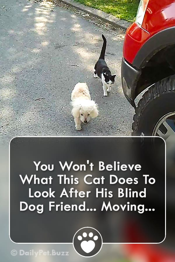 You Won\'t Believe What This Cat Does To Look After His Blind Dog Friend... Moving...
