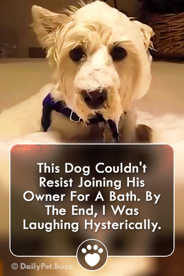 This Dog Couldn\'t Resist Joining His Owner For A Bath. By The End, I Was Laughing Hysterically.