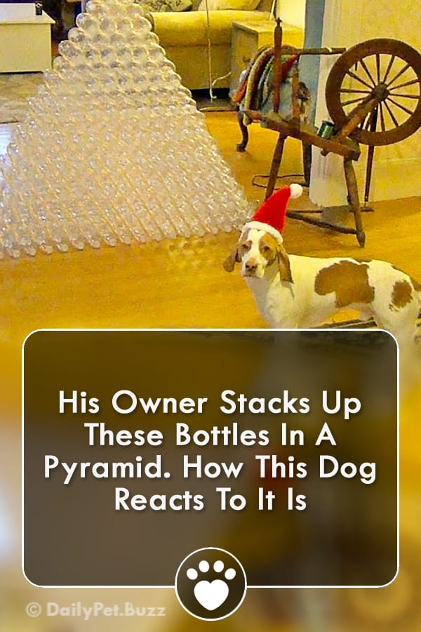 His Owner Stacks Up These Bottles In A Pyramid. How This Dog Reacts To It Is