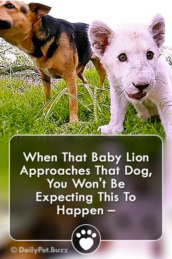 When That Baby Lion Approaches That Dog, You Won\'t Be Expecting This To Happen –