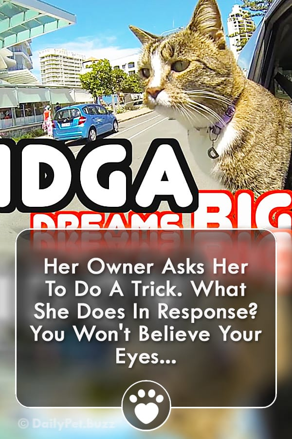 Her Owner Asks Her To Do A Trick. What She Does In Response? You Won\'t Believe Your Eyes...