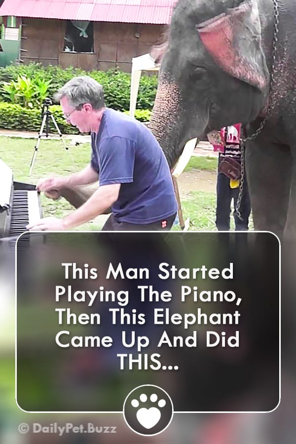This Man Started Playing The Piano, Then This Elephant Came Up And Did THIS...