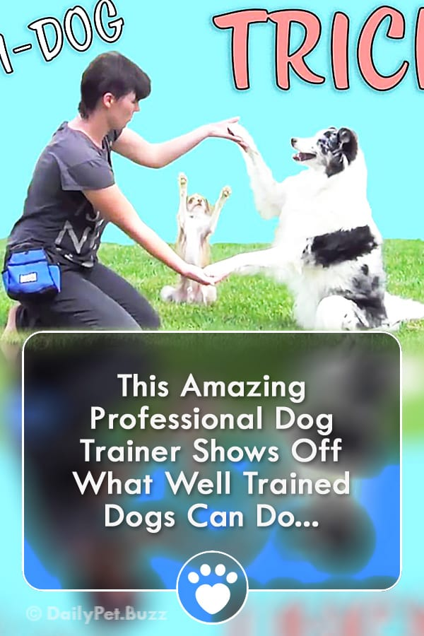 This Amazing Professional Dog Trainer Shows Off What Well Trained Dogs Can Do...