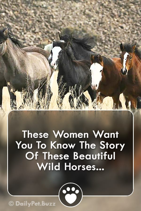These Women Want You To Know The Story Of These Beautiful Wild Horses...