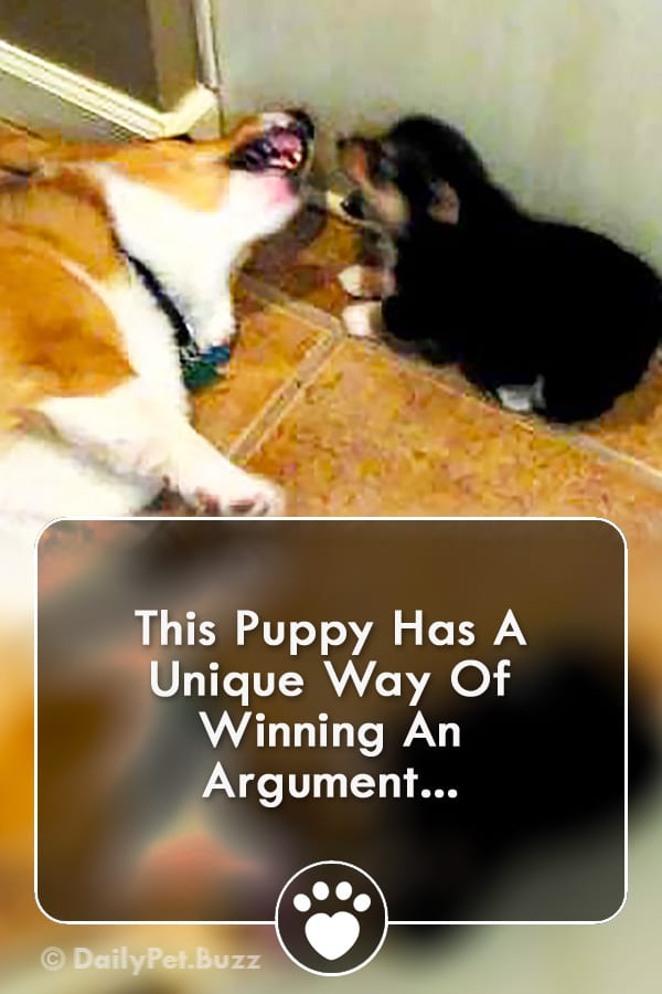 This Puppy Has A Unique Way Of Winning An Argument...