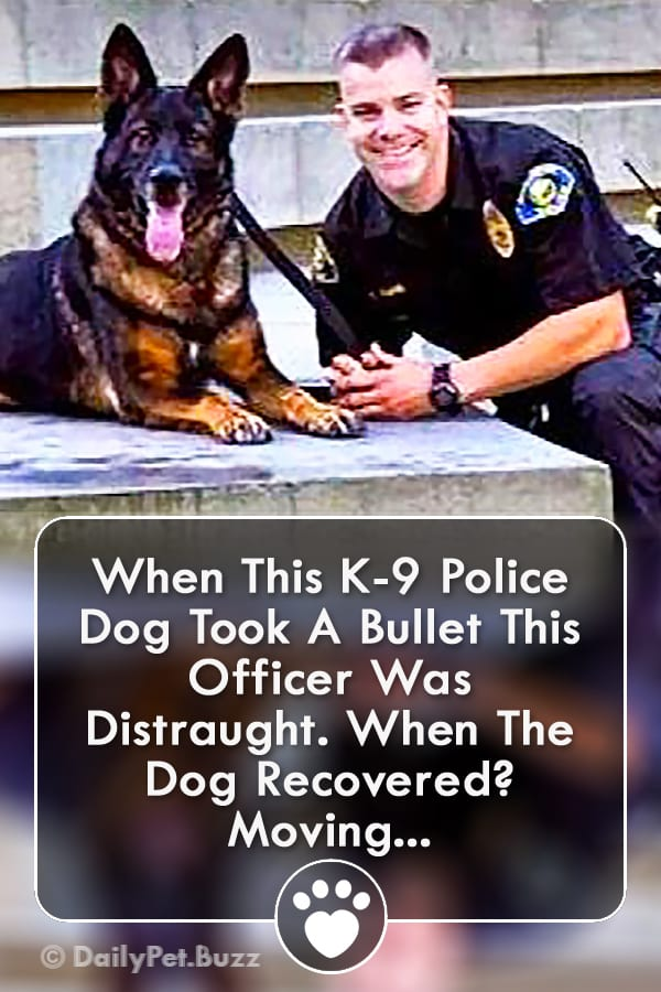 When This K-9 Police Dog Took A Bullet This Officer Was Distraught. When The Dog Recovered? Moving...