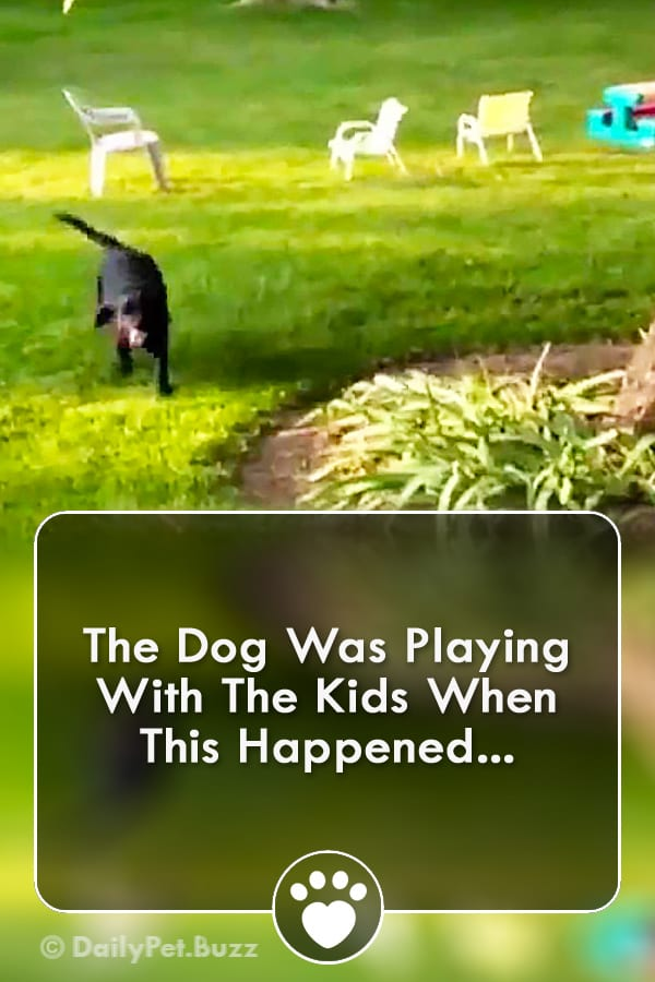 The Dog Was Playing With The Kids When This Happened...