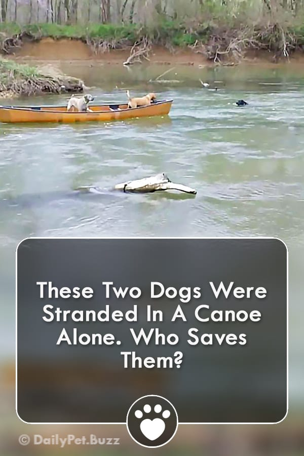 These Two Dogs Were Stranded In A Canoe Alone. Who Saves Them?