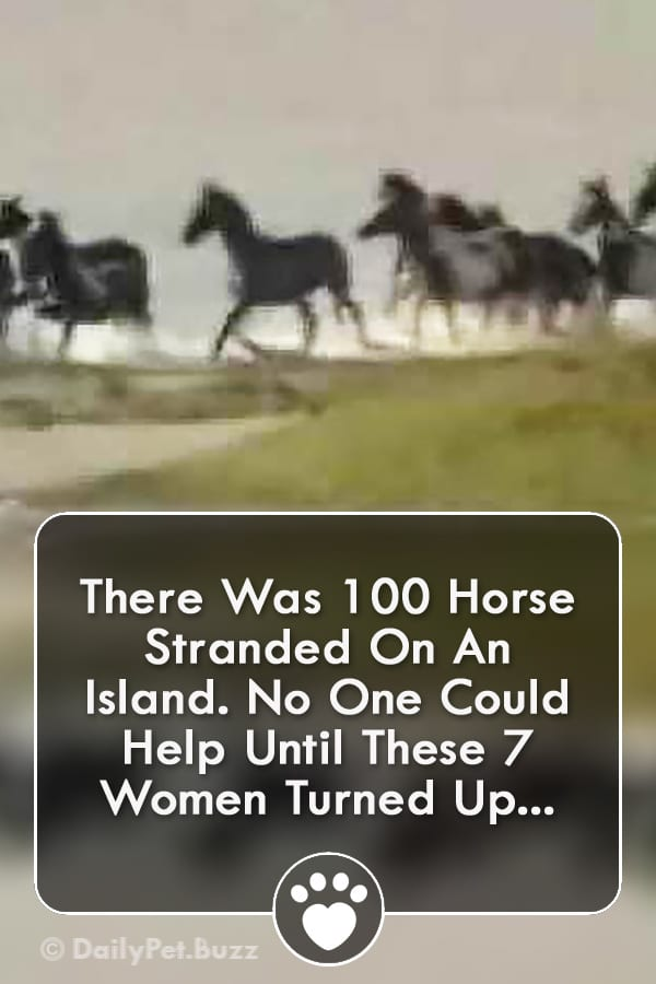 There Was 100 Horse Stranded On An Island. No One Could Help Until These 7 Women Turned Up...