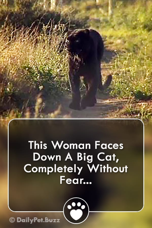 This Woman Faces Down A Big Cat, Completely Without Fear...