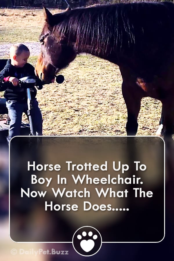Horse Trotted Up To Boy In Wheelchair. Now Watch What The Horse Does...