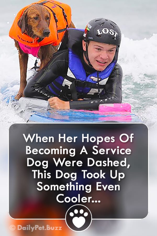 When Her Hopes Of Becoming A Service Dog Were Dashed, This Dog Took Up Something Even Cooler...