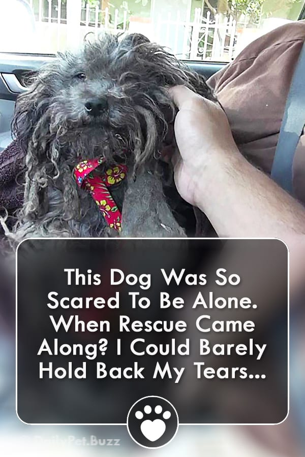 This Dog Was So Scared To Be Alone. When Rescue Came Along? I Could Barely Hold Back My Tears...
