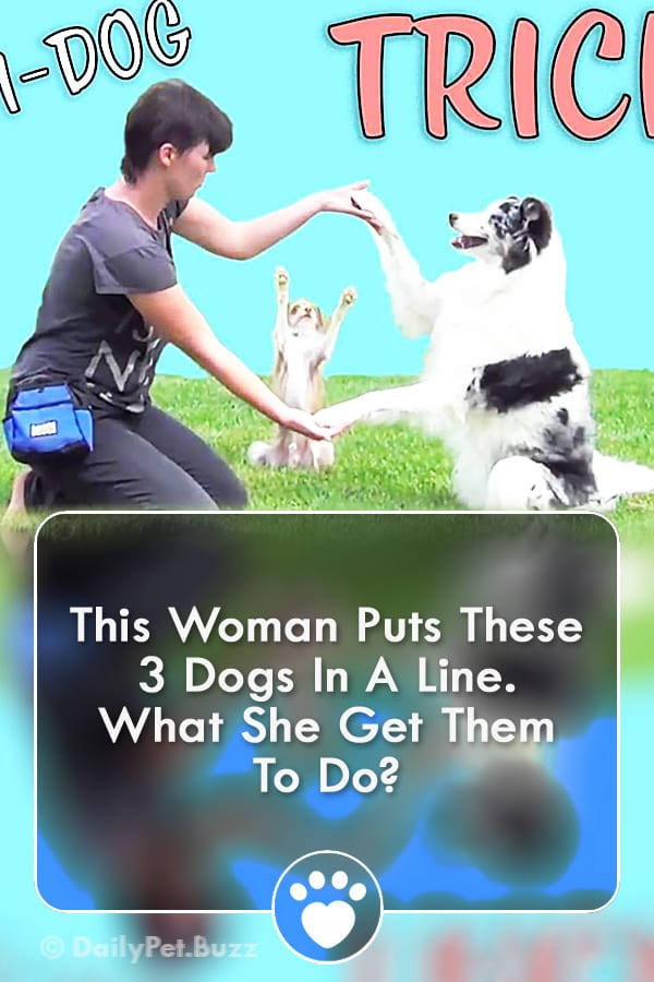 This Woman Puts These 3 Dogs In A Line. What She Get Them To Do?
