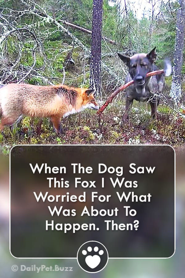 When The Dog Saw This Fox I Was Worried For What Was About To Happen. Then?