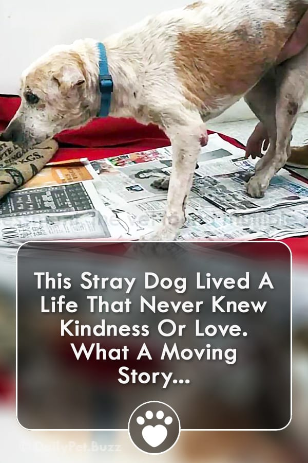 This Stray Dog Lived A Life That Never Knew Kindness Or Love. What A Moving Story...