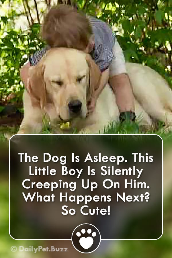 The Dog Is Asleep. This Little Boy Is Silently Creeping Up On Him. What Happens Next? So Cute!