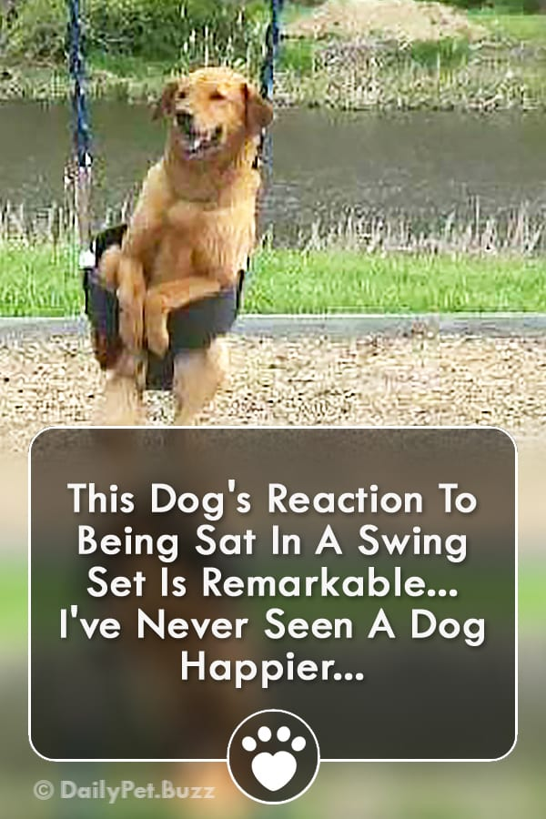 This Dog\'s Reaction To Being Sat In A Swing Set Is Remarkable... I\'ve Never Seen A Dog Happier...