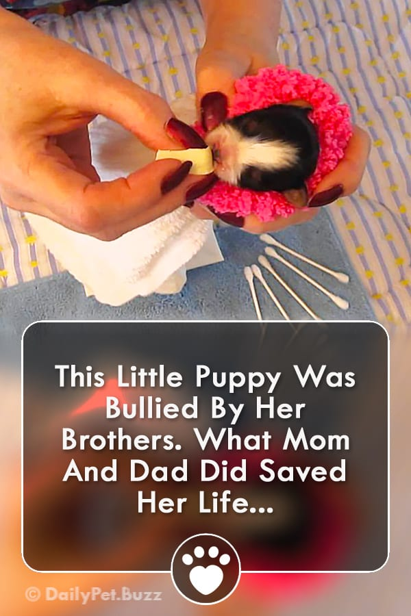 This Little Puppy Was Bullied By Her Brothers. What Mom And Dad Did Saved Her Life...