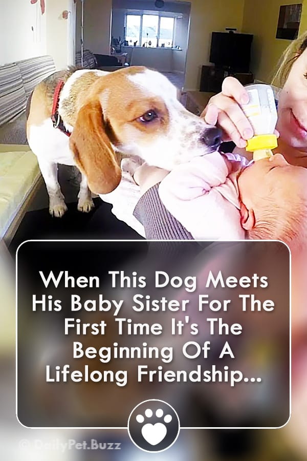 When This Dog Meets His Baby Sister For The First Time It\'s The Beginning Of A Lifelong Friendship...
