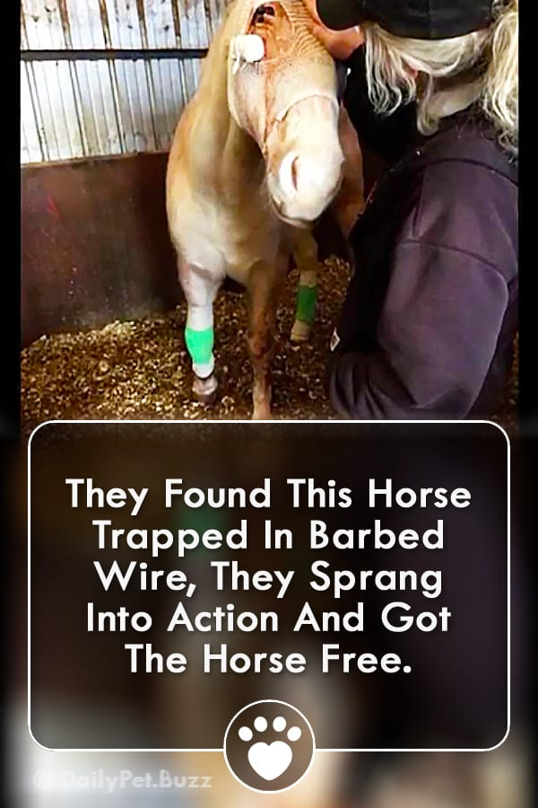 They Found This Horse Trapped In Barbed Wire, They Sprang Into Action And Got The Horse Free.