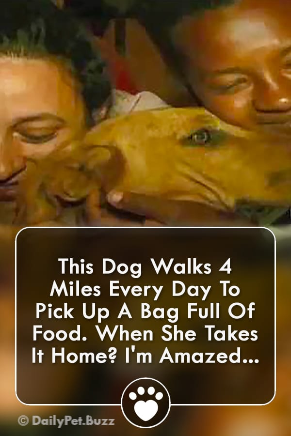 This Dog Walks 4 Miles Every Day To Pick Up A Bag Full Of Food. When She Takes It Home? I\'m Amazed...