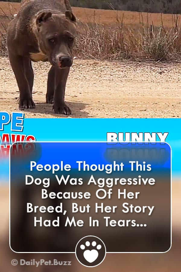 People Thought This Dog Was Aggressive Because Of Her Breed, But Her Story Had Me In Tears...
