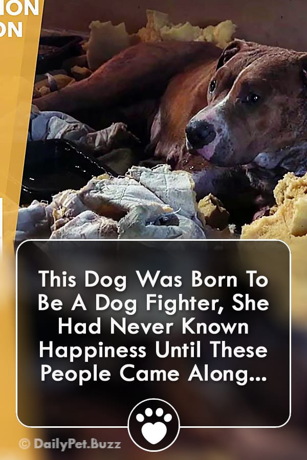 This Dog Was Born To Be A Dog Fighter, She Had Never Known Happiness Until These People Came Along...