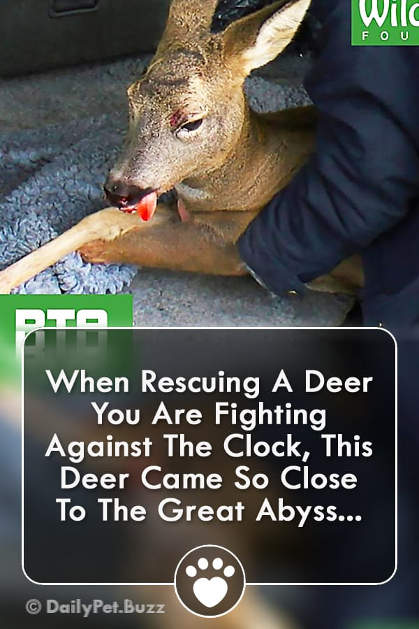 When Rescuing A Deer You Are Fighting Against The Clock, This Deer Came So Close To The Great Abyss...