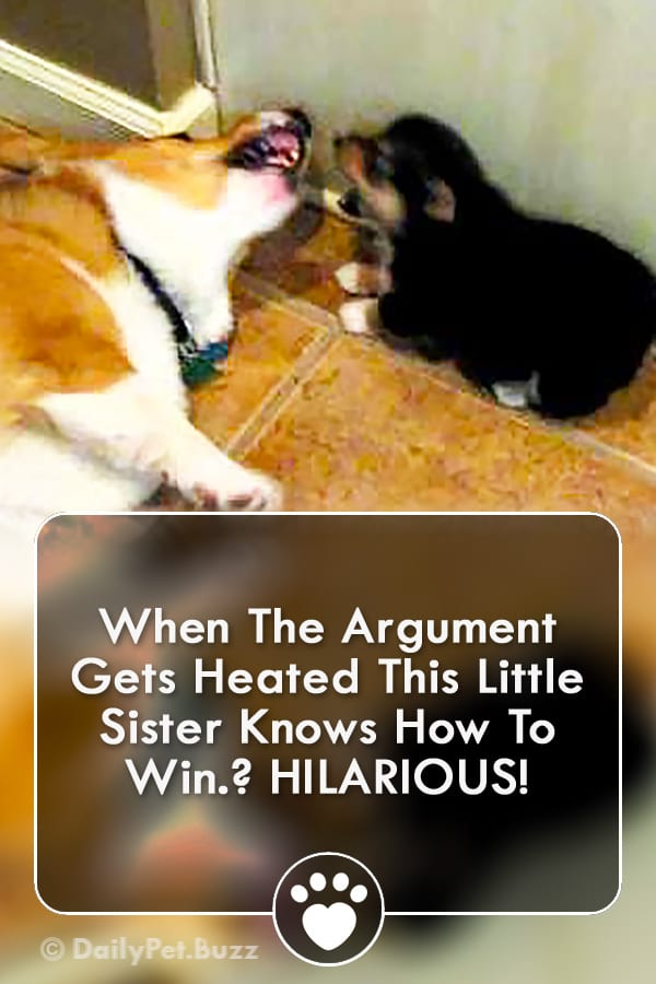 When The Argument Gets Heated This Little Sister Knows How To Win? HILARIOUS!