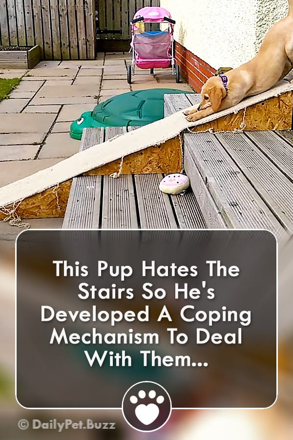 This Pup Hates The Stairs So He\'s Developed A Coping Mechanism To Deal With Them...