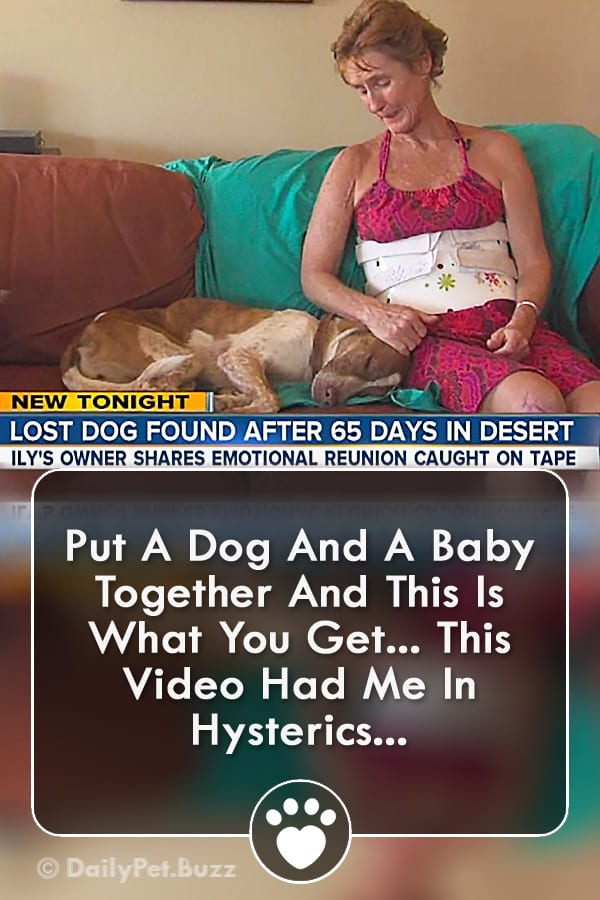 Put A Dog And A Baby Together And This Is What You Get... This Video Had Me In Hysterics...