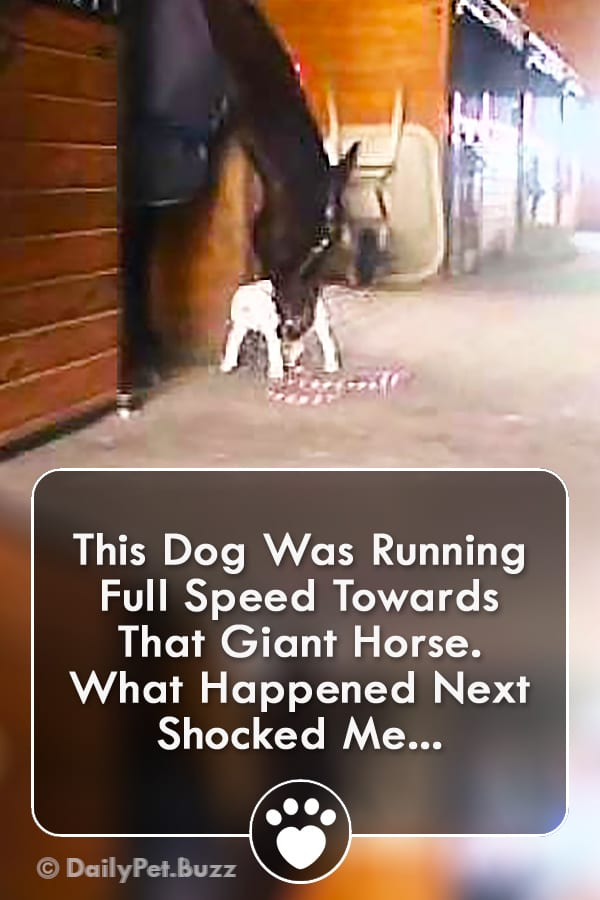 This Dog Was Running Full Speed Towards That Giant Horse. What Happened Next Shocked Me...