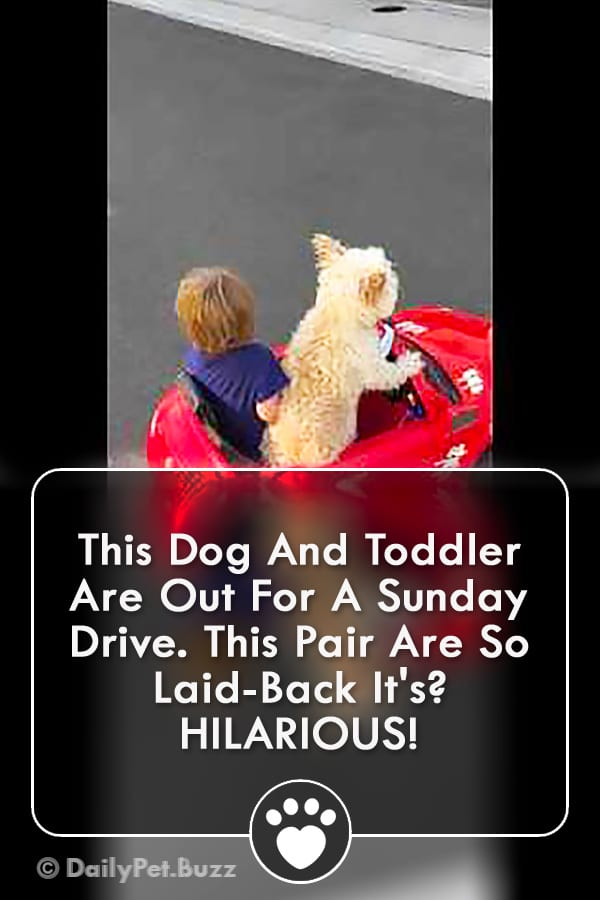 This Dog And Toddler Are Out For A Sunday Drive. This Pair Are So Laid-Back It\'s? HILARIOUS!
