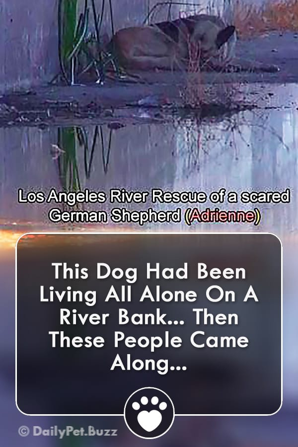 This Dog Had Been Living All Alone On A River Bank... Then These People Came Along...