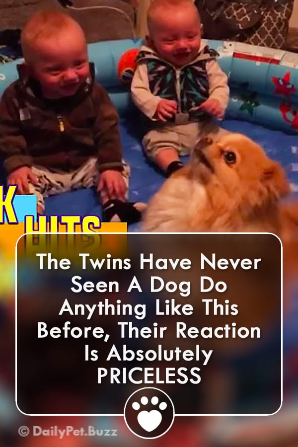 The Twins Have Never Seen A Dog Do Anything Like This Before, Their Reaction Is Absolutely PRICELESS