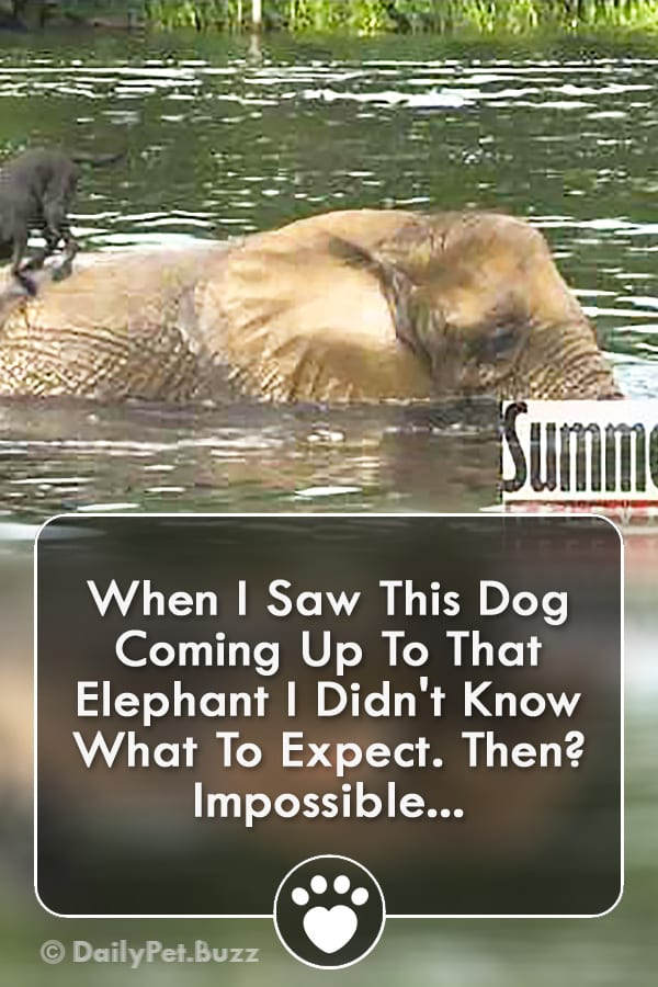 When I Saw This Dog Coming Up To That Elephant I Didn\'t Know What To Expect. Then? Impossible...