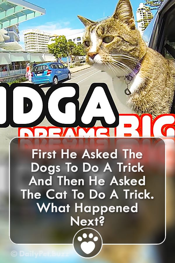 First He Asked The Dogs To Do A Trick And Then He Asked The Cat To Do A Trick. What Happened Next?
