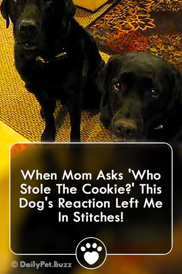 When Mom Asks \'Who Stole The Cookie?\' This Dog\'s Reaction Left Me In Stitches!
