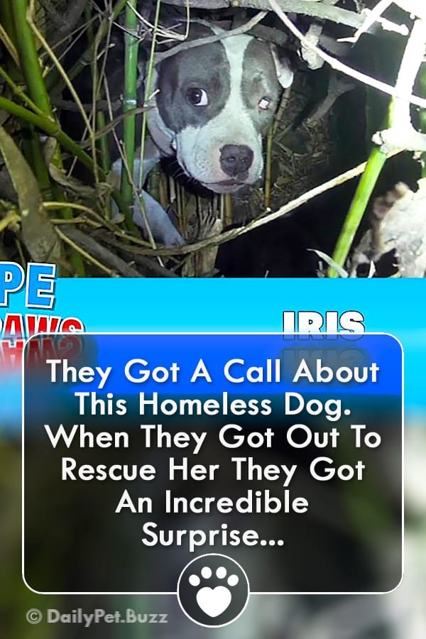 They Got A Call About This Homeless Dog. When They Got Out To Rescue Her They Got An Incredible Surprise...